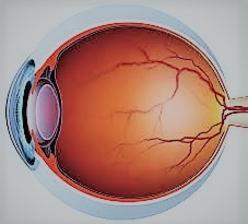 מבנה העין